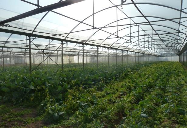 Agricoltura - serra irrigata con acqua DMBio