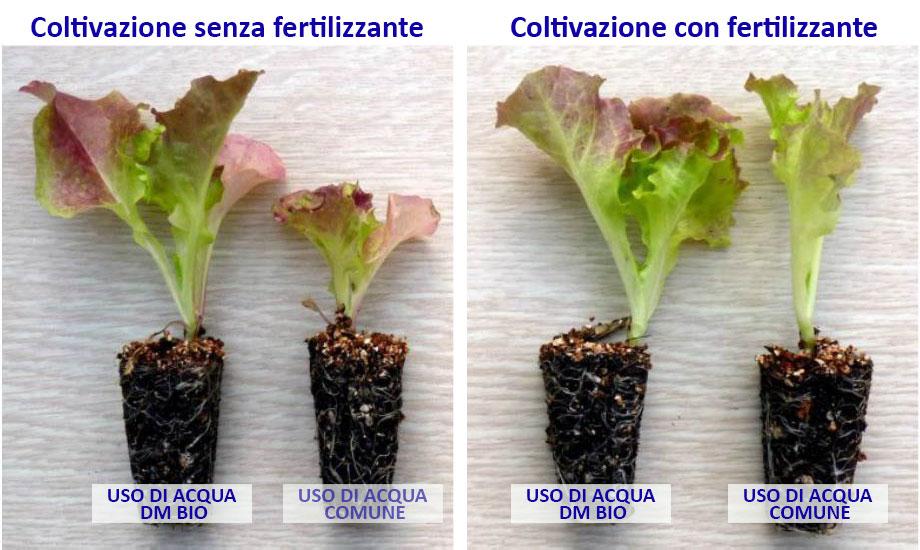 Agricoltura - Comparazione foglia lattuga con acqua trattata con acqua immuno-bio-attiva DMBio