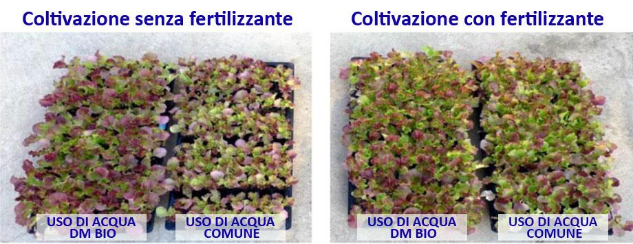 Agricoltura - Comparazione lattuga con acqua immunobioattiva DMBio