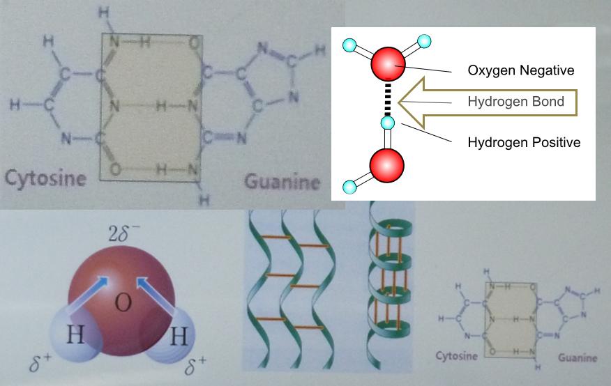funzionamento legame idrogeno acqua bioattiva DMBio