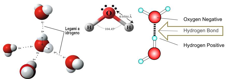 legami a idrogeno nell' acqua